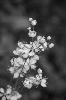 Blomställning