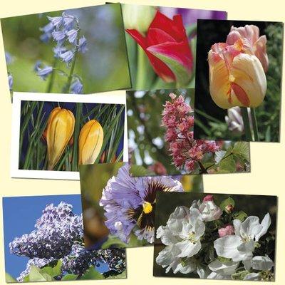 Bukett 8 st blomkort vårblommor
